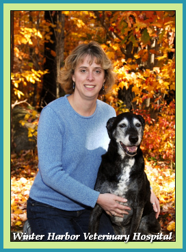 Becky White, Veterinarian Technician at Winter Harbor Veterinary Hospital with Hank