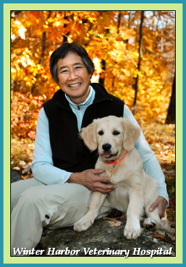 Dr. Sandra M. Wing, D.V.M. at Winter Harbor Veterinary Hospital with Trekker